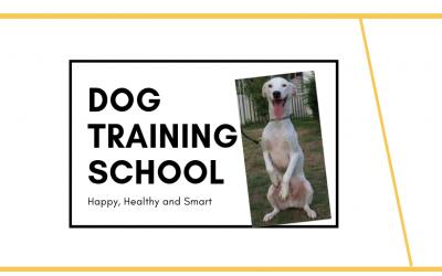 โรงเรียนฝีกสุนัข